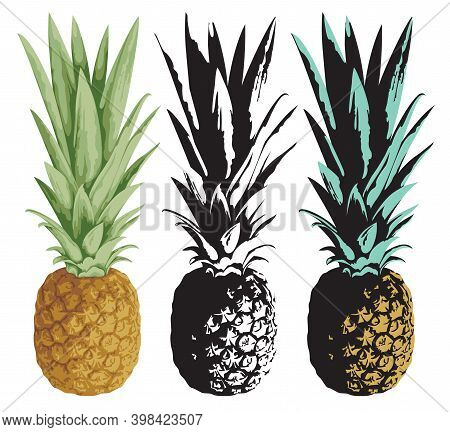 Set Of Vector Images Of Whole Pineapple Fruits With Leaves Close-up. Set Of Vector Illustration Of C