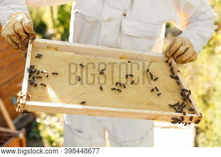 Closeup Hands Of Beekeeper Hold Wooden Frame With Honeycomb. Collect Honey. Beekeeping Concept.