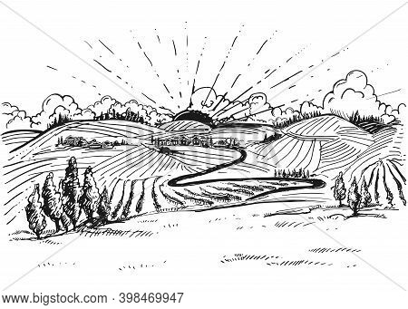 Detailed Hand Drawn Ink Black And White Illustration Of Grapevine, Vineyard Field. Sketch. Vector. E