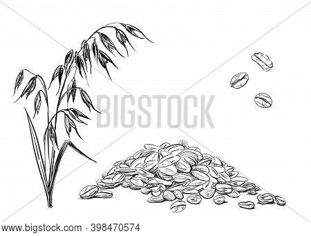 Detailed Hand Drawn Ink Black And White Illustration Set Of Oat, Grain, Oatmeal, Leaf. Sketch. Vecto