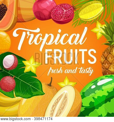 Tropical Fruits Vector Pineapple, Lychee, Orange And Carambola, Banana, Melon Watermelon And Pomegra