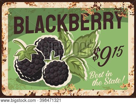Blackberry Rusty Metal Plate, Vector Vintage Rust Tin Sign With Ripe Sweet Berries, Price Tag For Re