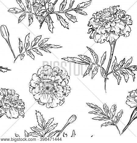 Hand Drawn Vector Seamless Pattern Of Marigold Flowers.