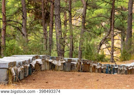 Multicolored Bee Hives At Apiary In The Forest. The Houses Of Bees Honey Bee Farm Nature Forest, Bee