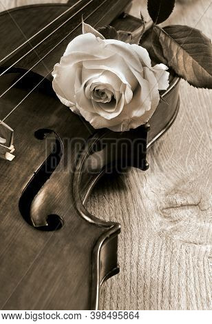 Rose And Violin Close Up. White Rose And Vintage Violin. Melody Concept. Black And White