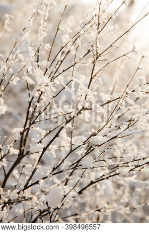 Thin Twigs Of Cherries In The Snow. The Snow Looks Like Small Flowers. The Twigs Are Highlighted In