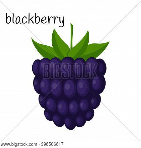 Blackberries With Leaves. A Single Illustration. Fruit, Berry Icon. Flat Design. Color Vector Illust