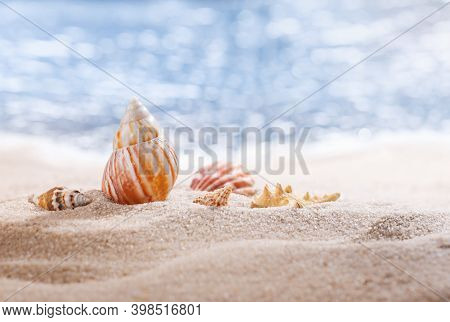 Shiny Big Seashell And Other Small Seashells On The Beach With Perfect Seascape In The Sun. Blurred
