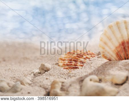 Two Small Seashells And Pebbles On The Beach With Perfect Seascape In The Sun. Place For Text. Banne