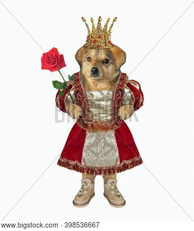 The Queen Of Dogs In A Golden Crown, Dressed In A Beautiful Dress, Holds A Red Rose. White Backgroun