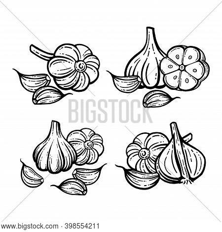Garlic Set. Hand Drawn Illustrations. Sliced Garlic Isolated Background.