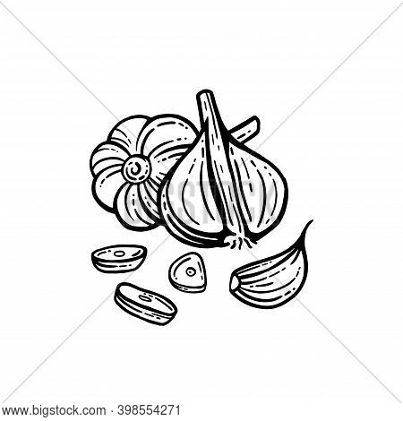 Garlic Set. Hand Drawn Illustration Of Chopped Garlic. Isolated Background. With Layers.