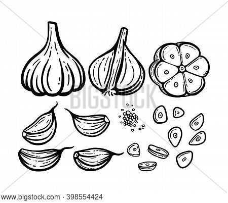 Garlic Set. Hand Drawn Illustrations. Vector Chopped Garlic, Seeds.