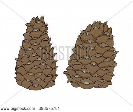 Two Brown Cedar Cones In A Cartoon Style. Nature Design Element. Hand Drawing Cone. Vector Illustrat
