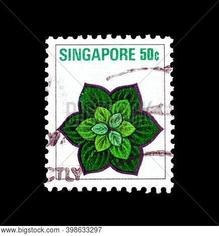 Singapore - Circa 1973 : Cancelled Postage Stamp Printed By Singapore, That Shows Costus Malorticanu