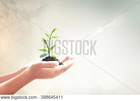Abstract, Agriculture, Arbor, Biology, Charity, Company, Concept, Conservation, Corporate Social Res