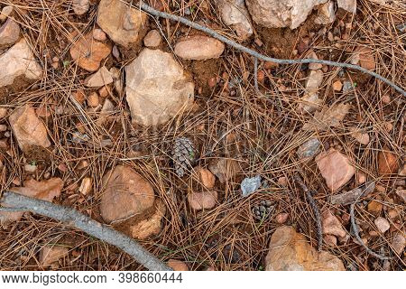 Laterite Soil Orange Clay Rocks Dry Grass Pine Needles In Autumn Forest In Bulgaria