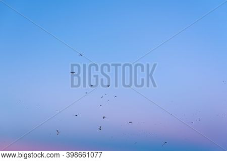A Gentle Evening With Blue And Pink Vibrant Sky And Migrating Birds In Flight Calm Landscape Nature