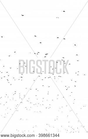 Flock Of Birds Migrating Isolated On A White Background Autumn Sky View In Plovdiv, Bulgaria