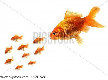 Big fish chasing little goldfish