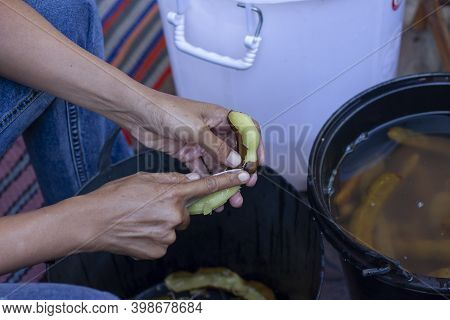 Hand Of Women Holding Paring Knife For Peeled Tamarind Prepare To Be Food Processing Into Pickled Ta