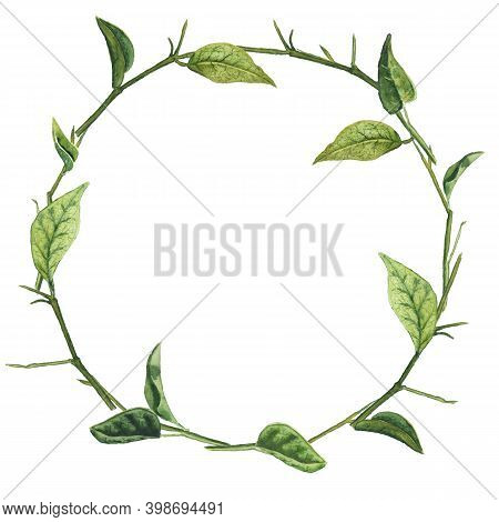 Round Frame With Bared Branches And Green Leaves. Realistic Watercolor Hand Drawn Illustration Isola