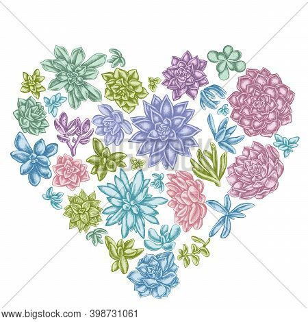 Heart Floral Design With Pastel Succulent Echeveria, Succulent Echeveria, Succulent Stock Illustrati