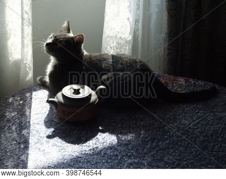 Horisontal Photo Of Aristocratic Elegant Grey Smoky Domestic Cat In Backlight With Clay Teakettle La
