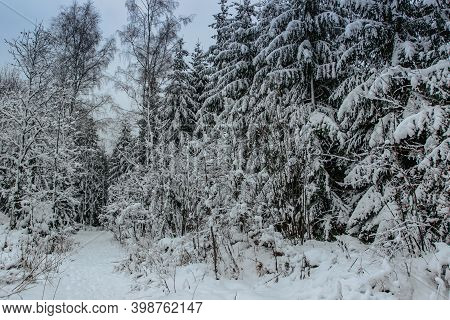 Forest Path With Fresh Snow. Beautiful Snowy Trees. Cold Winter Day In Countryside. Frozen Trees. Ch