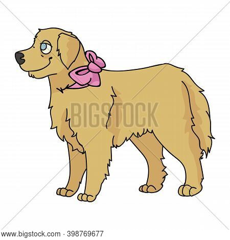 Cute Cartoon Golden Retriever Dog With Cute Bow Breed Vector Clipart. Pedigree Kennel Doggie Breed.
