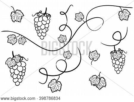Set Of Hand Drawn Isolated Grape Elements. Grapevine, Bunches And Leaves. Vector Black And White Ill