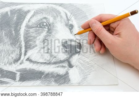 Close-up Of A Mans Hand Draws A Drawing With A Simple Pencil. Drawing Of A Dogs Head On Paper. Horiz