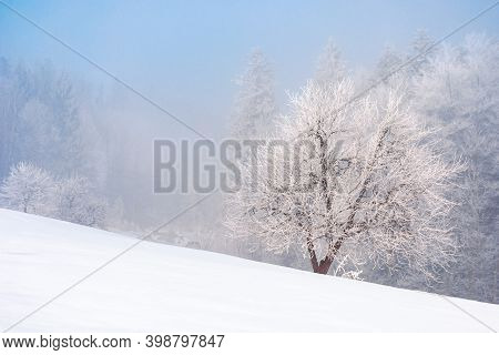 Beech Tree In Mist On A Snow Covered Hill. Fairy Tale Winter Mountain Scenery. Frosty Weather On A S