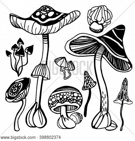 Set Of Stylized Magic Psychedelic Mushrooms. Coloring Page Hallucinogenic, Fantazy Mushrooms. Black