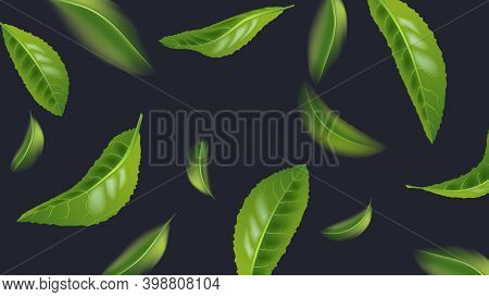 Realistic Beautiful Flying Green Tea Leaf Isolated On Dark. Leaves Spring Background. The Premium Gr