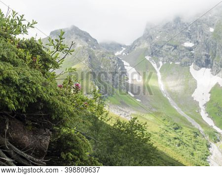 Green Summer Alpine Mountain Valley With Wet Green Vegatation And Pink Flowers In Foreground. Stubai