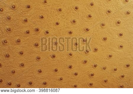 Texture Of Genuine Leather Stamped Under The Skin Of An Ostrich Close-up, Fashion, Exotic Background