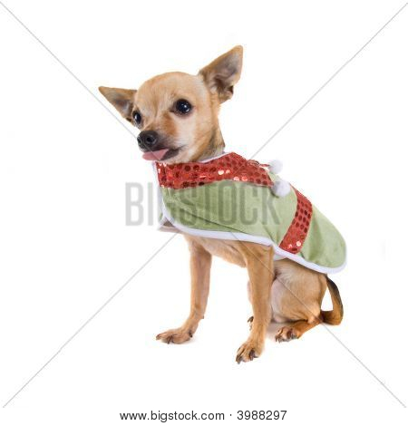Elf Dog
