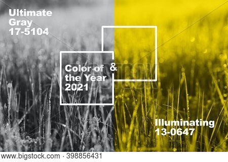 Collage With New Panton Illuminating, Ultimate Gray Color Of The Year 2021. Natural Background