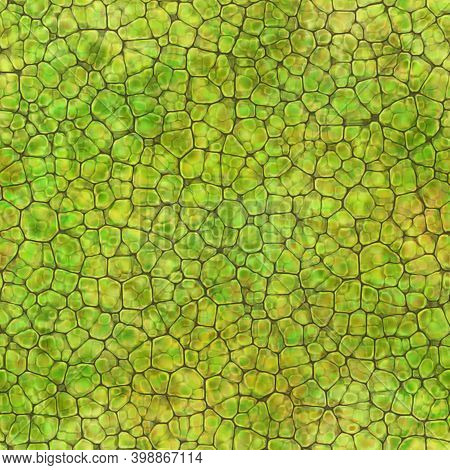 Cartoon Seamless Texture Of Color Fantasy Cobble Stone Ground Pavement. Soft Shaped Rocks As Backgro