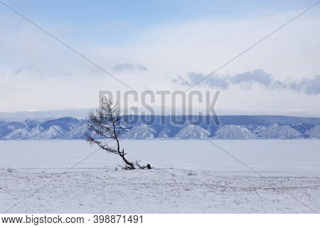 Lonely Tree On The Shore Of Lake Baikal. Olkhon Island Winter Landscape