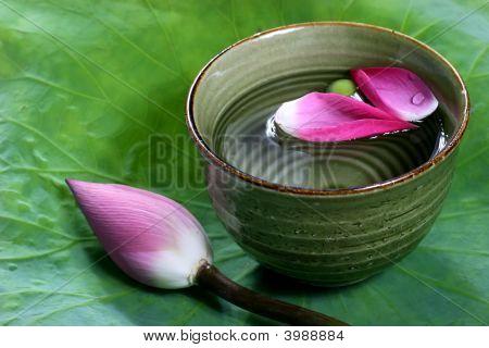 Lotus Petal In A Green Fresh Bowl Water