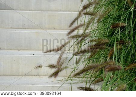 Ornamental Grass By A Concrete Staircase With A Metal Railing, Stairs On Which You Like To Sit On A
