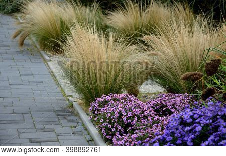 Autumn Flowerbed With Perennials And Grasses In A Square With Black Stone Cobblestone Tiles, Granite