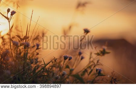 Selective Focus On Grass Flower And Spider Web On Blur Background Of Orange Sunrise Sky. Meadow Gras