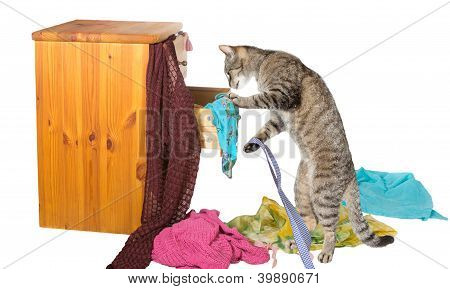 Curious Cat Rummaging In A Drawer