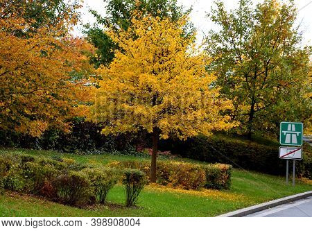 Maple In Autumn Yellow Color. Highway Road Sign With Toll. Sometimes The Marks Are Covered By An Ove