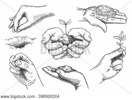 Hands With Plant Sprout. Farmer Hand Holding Soil And Planting Seeds. Save Nature, Grow New Trees. A
