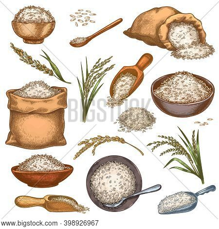 Rice Sacks And Cereals. Vintage Bags, Bowls And Scoops With Grains. Ear Spikes And Seed Pile. Colorf