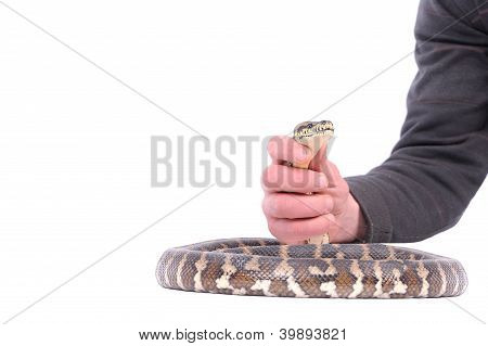 Man Holding Snake In The Hand